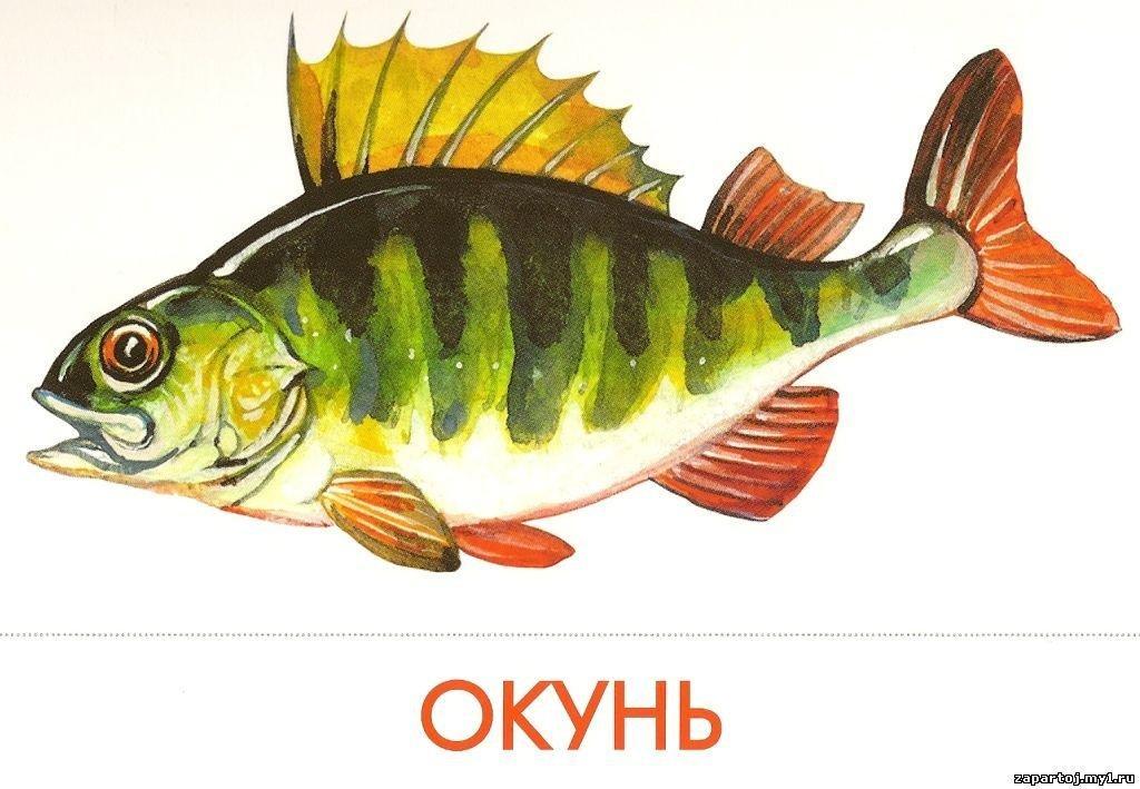 Картинки имена рыбок