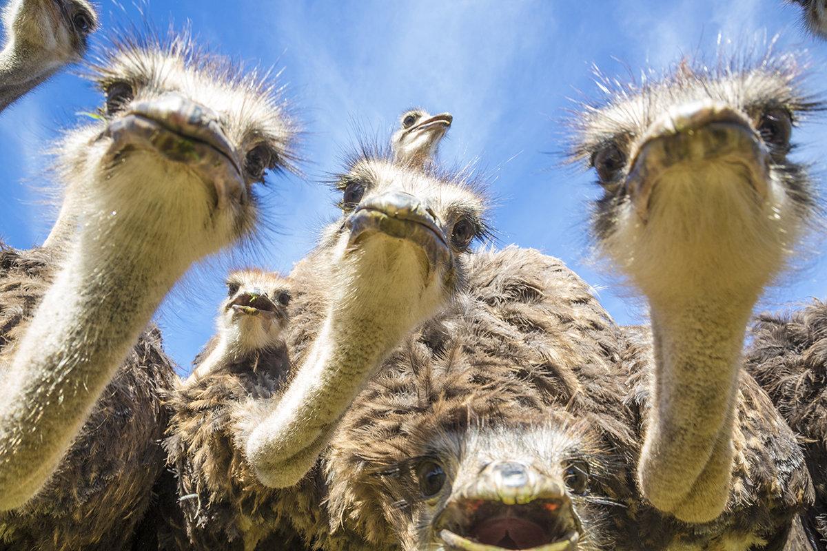 Открытки страуса, открытка день