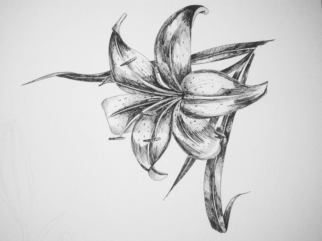 Позитивные картинки, лилии рисунок