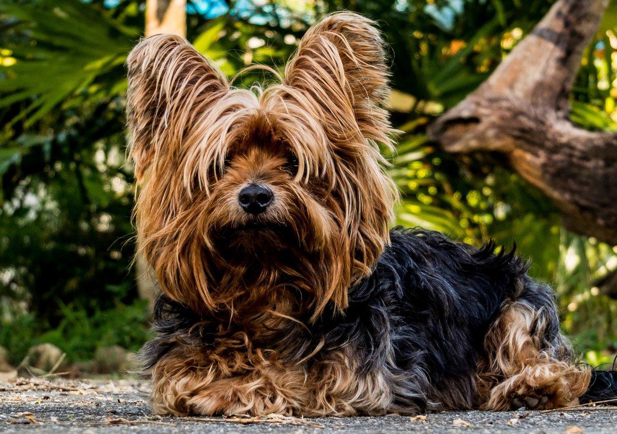 Картинки обычных собачек