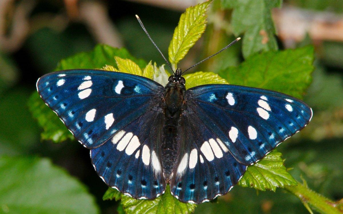 Картинка бабочки, открыток как называется