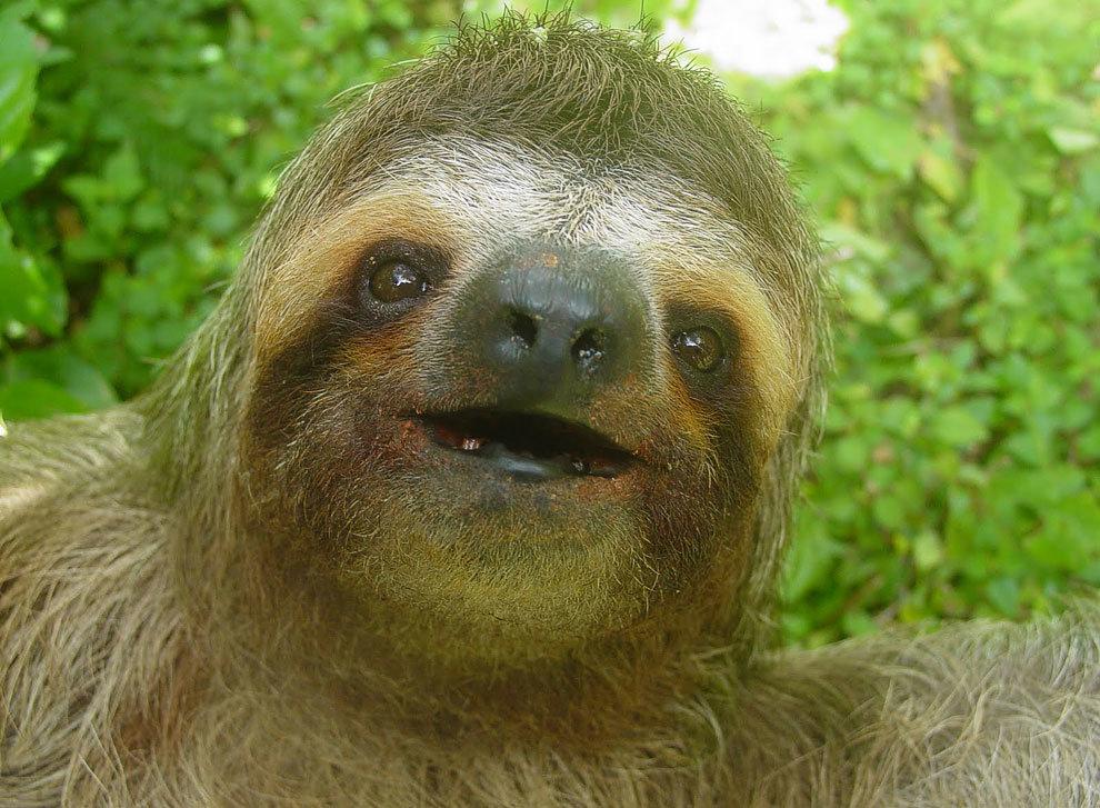 Днем, картинки приколы ленивец