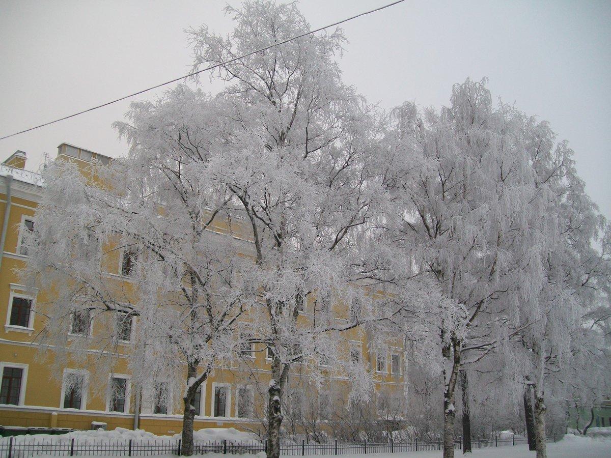Фото зима деревья в городе