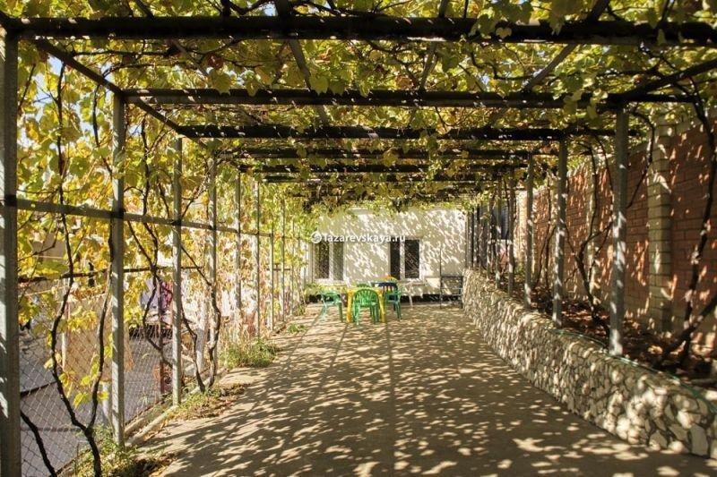 навес из виноградника фото малым сидели
