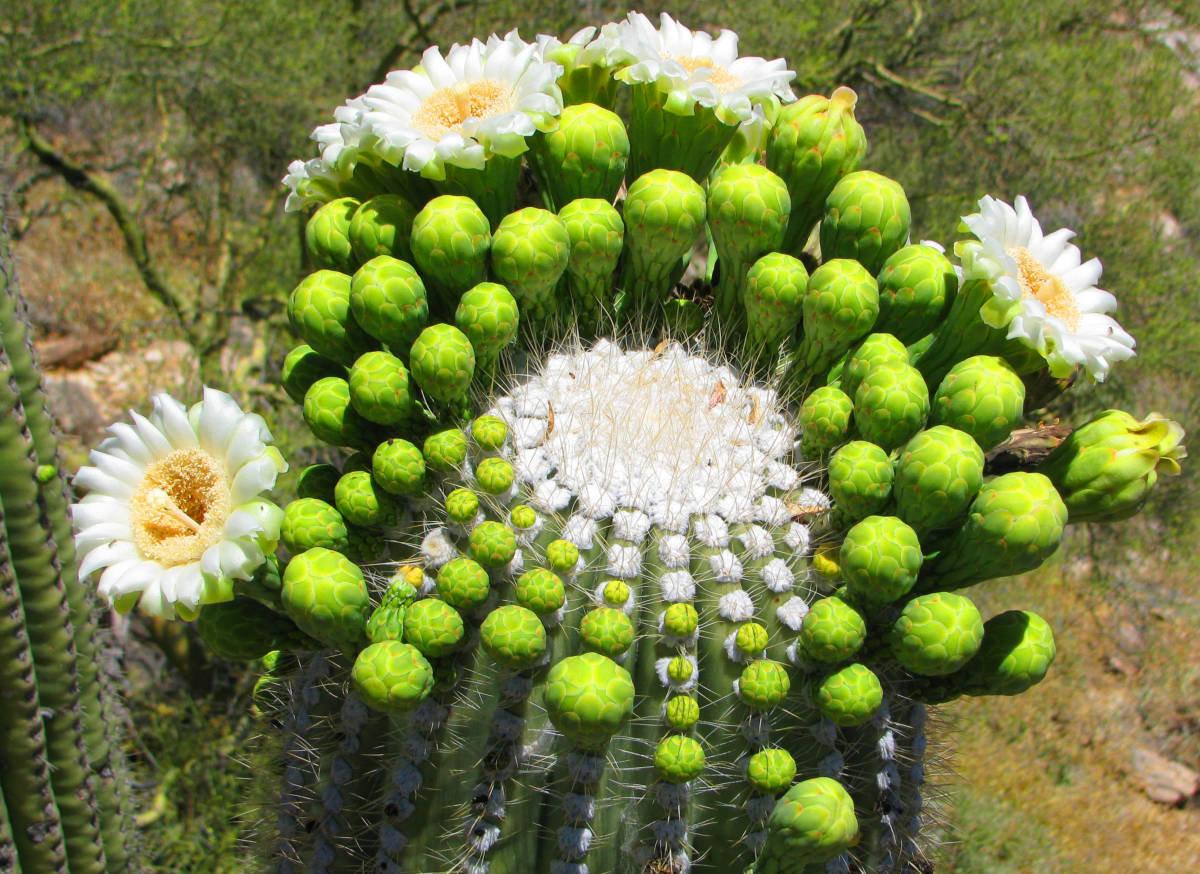 Все растения в мире список с фото