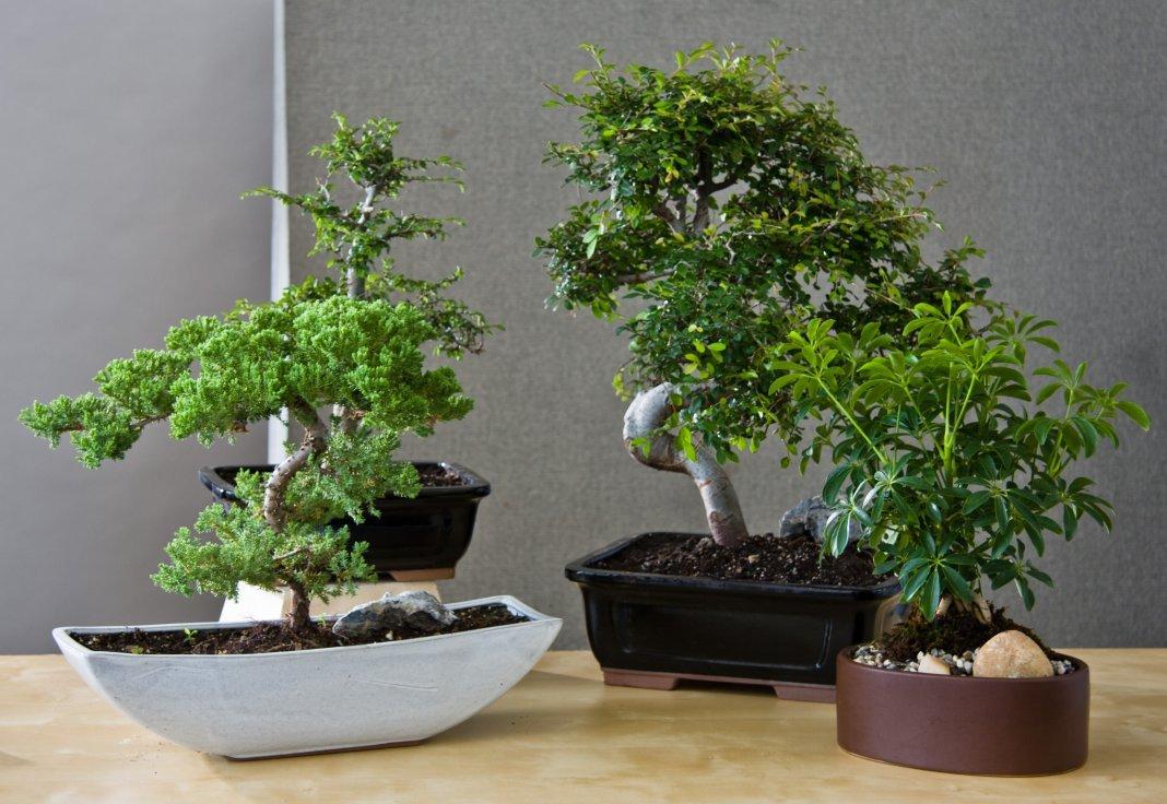 домашние деревья фото с названиями для