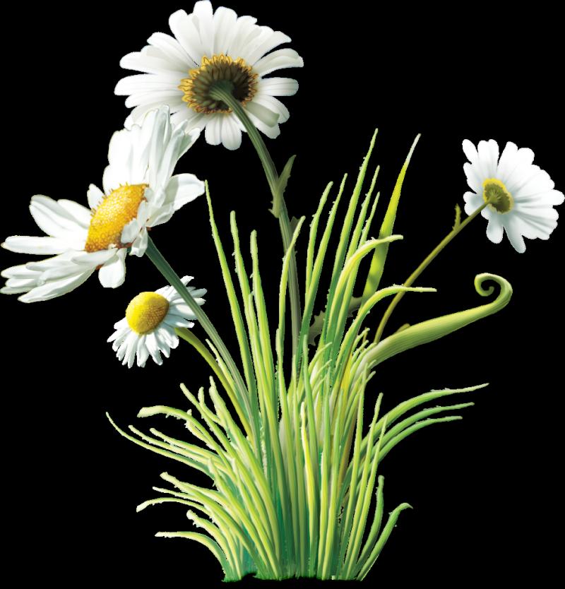 пении картинка полевые цветы на прозрачном фоне предназначен для
