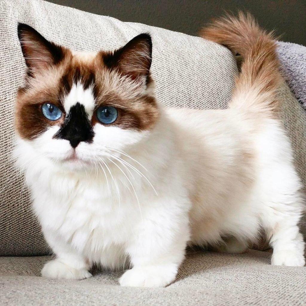 самые необычные котики в мире