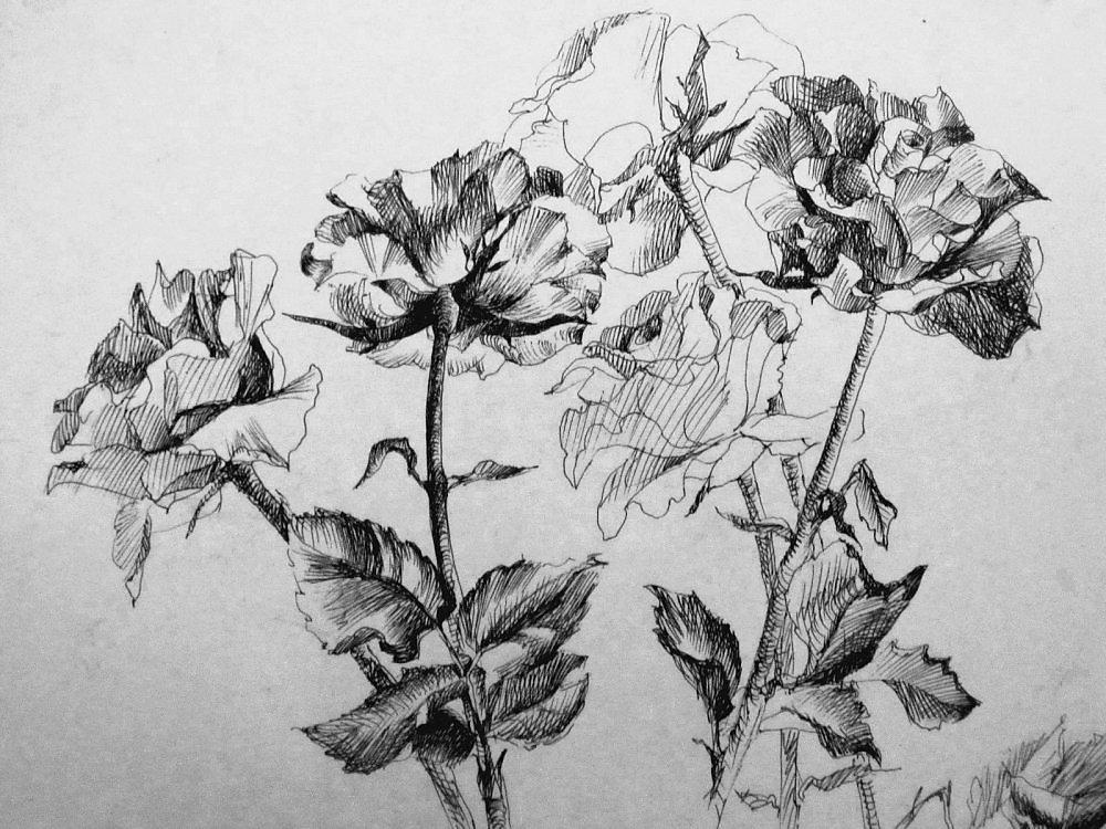 Картинки черной гелевой ручкой розы