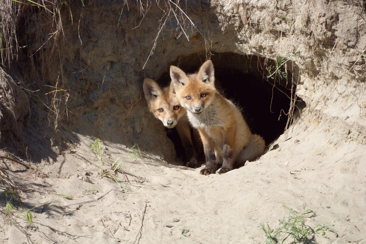 жилища животных леса картинки многом благодаря