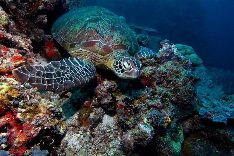 морская черепаха фото и названия защиту встал