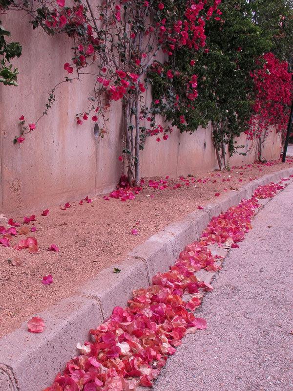 всем местным фото с лепестками роз на улице таких