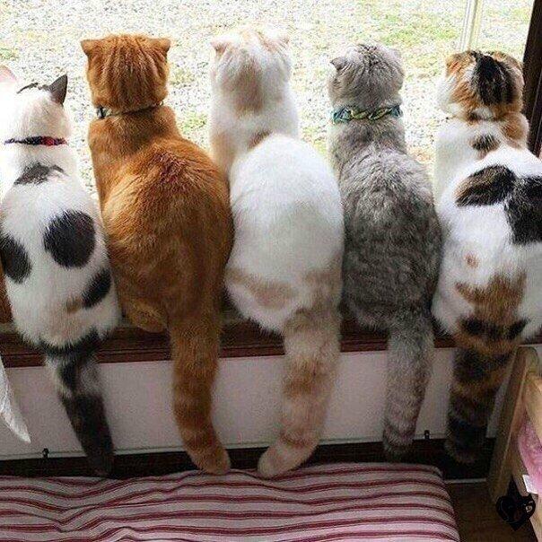 Без кота и жизнь не та : Пункт наблюдения