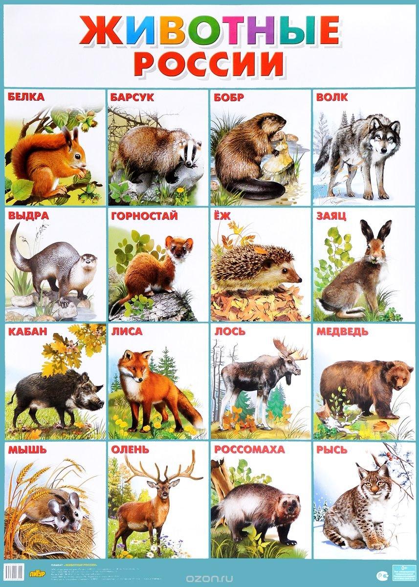 большого плакаты с картинками животных частных домовладениях, построенных