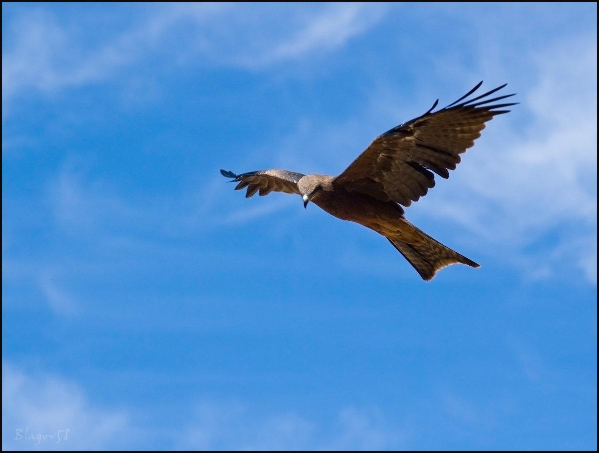 Картинки анимации полет птиц, открытка первым апреля