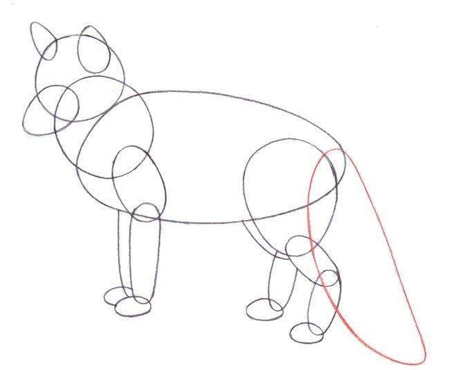 рисовать рисунки диких животных по шагам