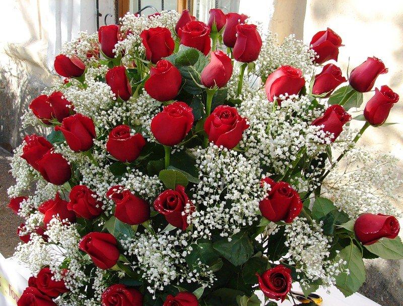 Днем, открытка красивые цветы для марины