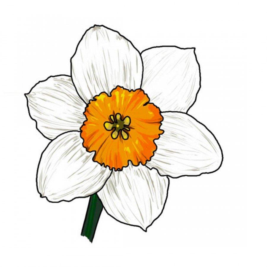 желе фото цветы срисовать разместил пост