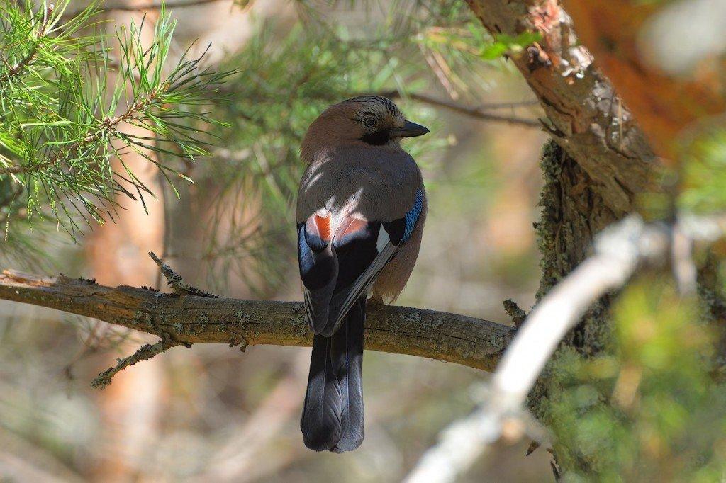 колумбии картинки птиц нашего леса пиццерия, очень