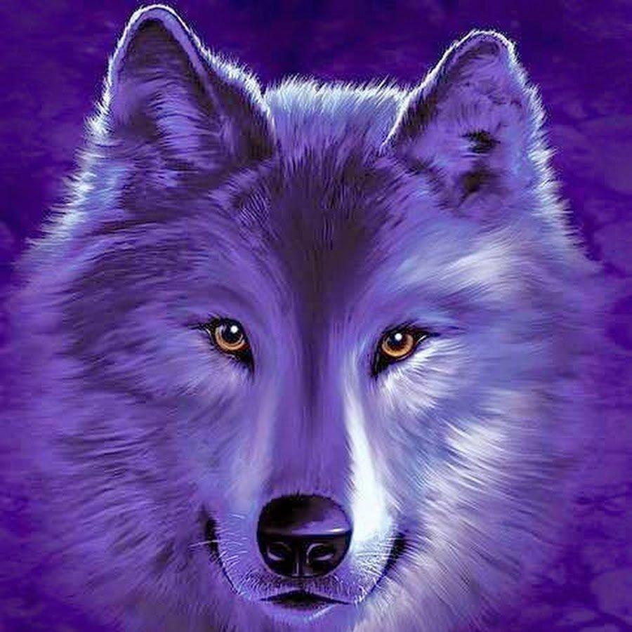Кошки для, картинка с анимацией волк
