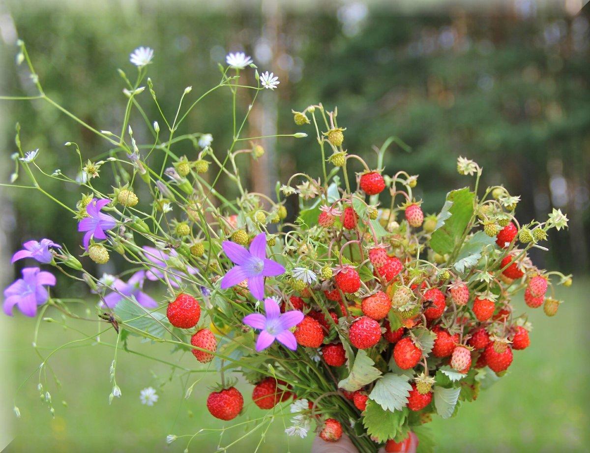 картинки с полевыми цветами и ягодами гораздо приятнее проявить