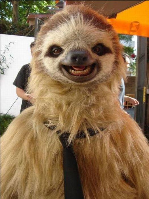 Картинка ленивец смешная, день рождения