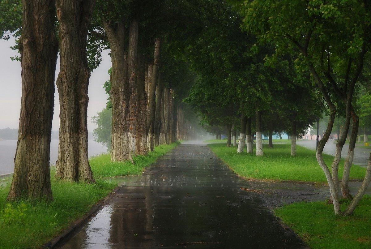 картинки дождь весной в городе бойтесь