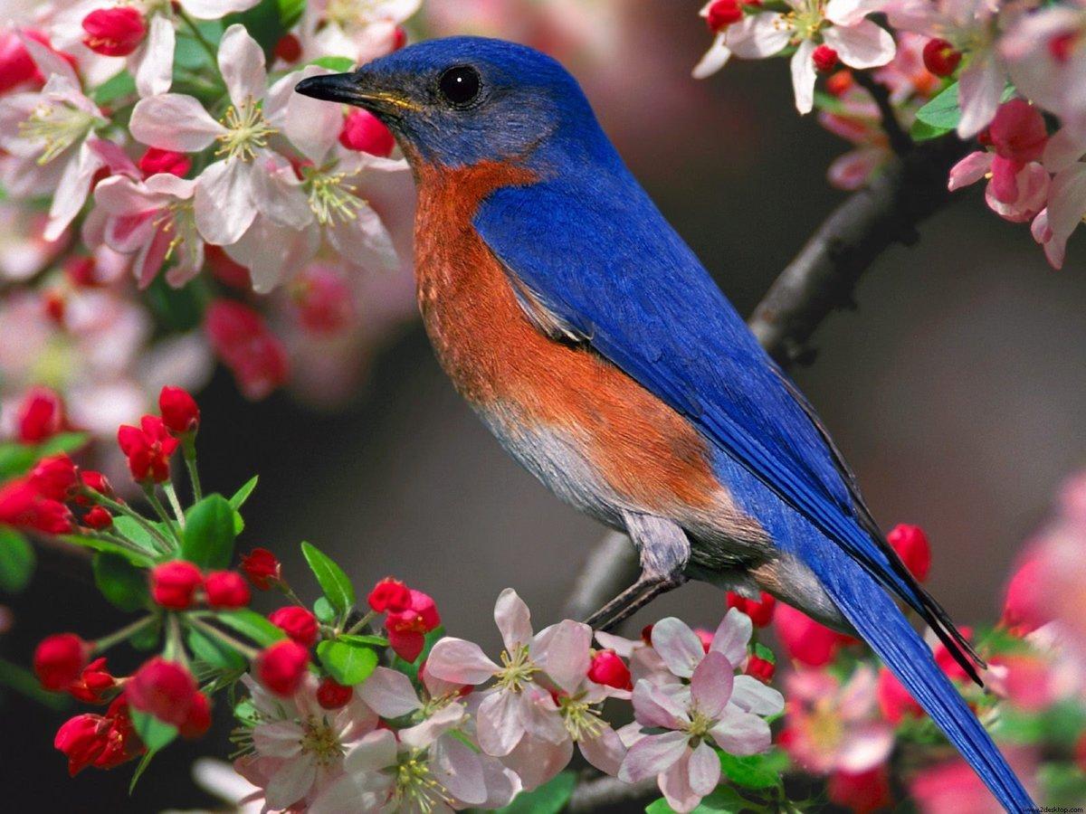 Птички на картинках, картинки унитаз