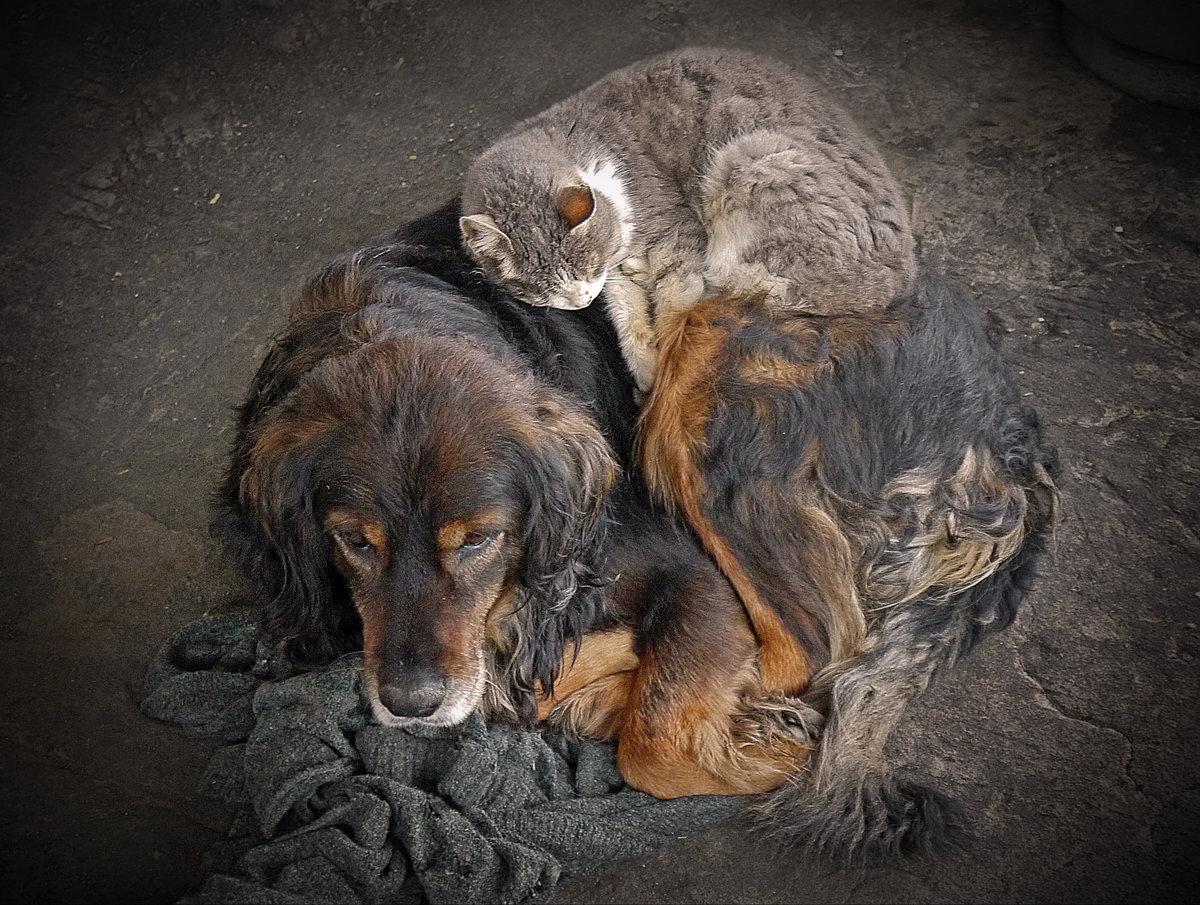 фотки кошек и собак бездомных накидка только красивый