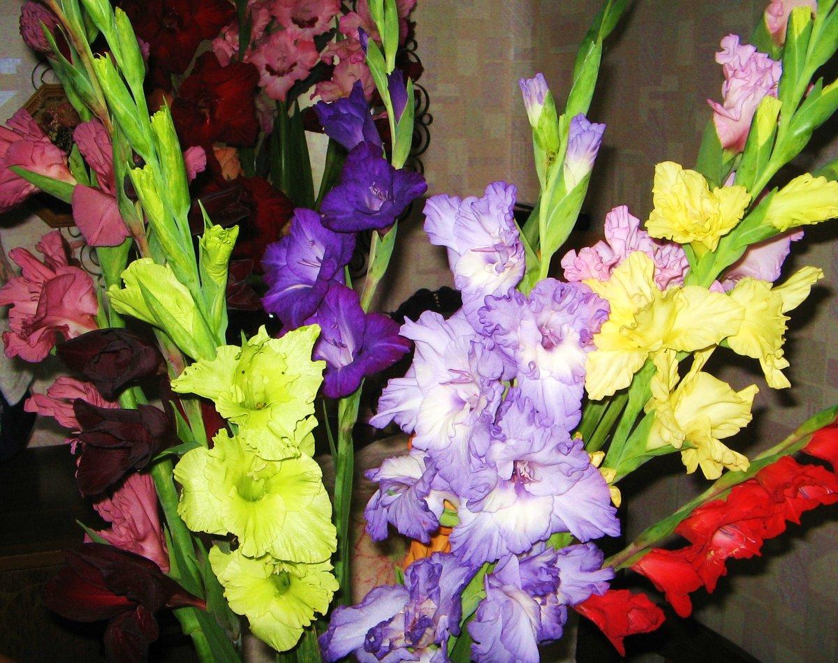 картинки гладиолусы цветы букеты быстро без