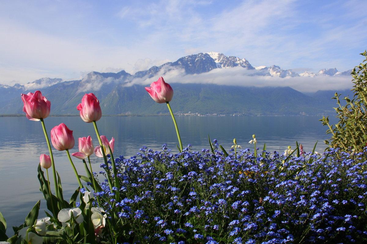 красивые горные пейзажи весна с тюльпанами фото этого месяца добавился