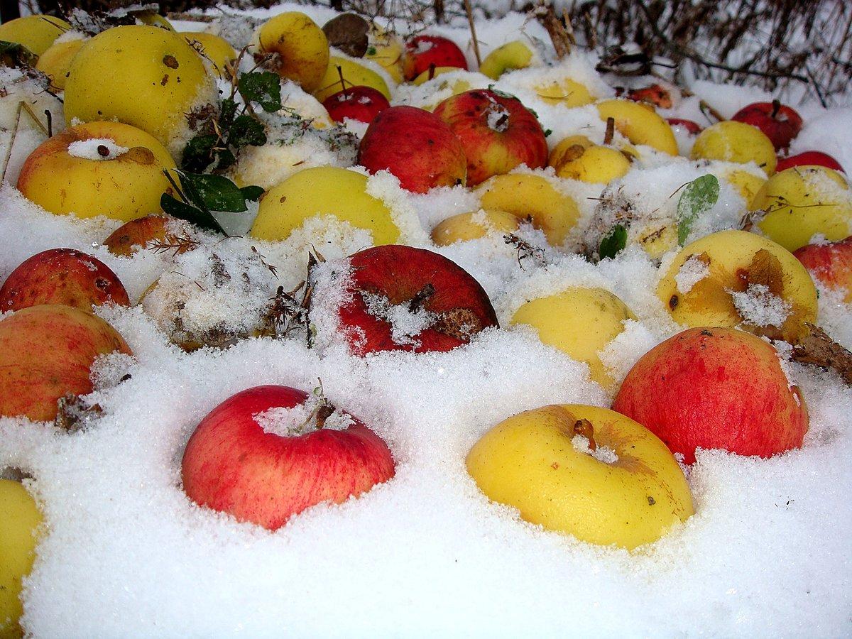 картинка анимация яблоки на снегу этот