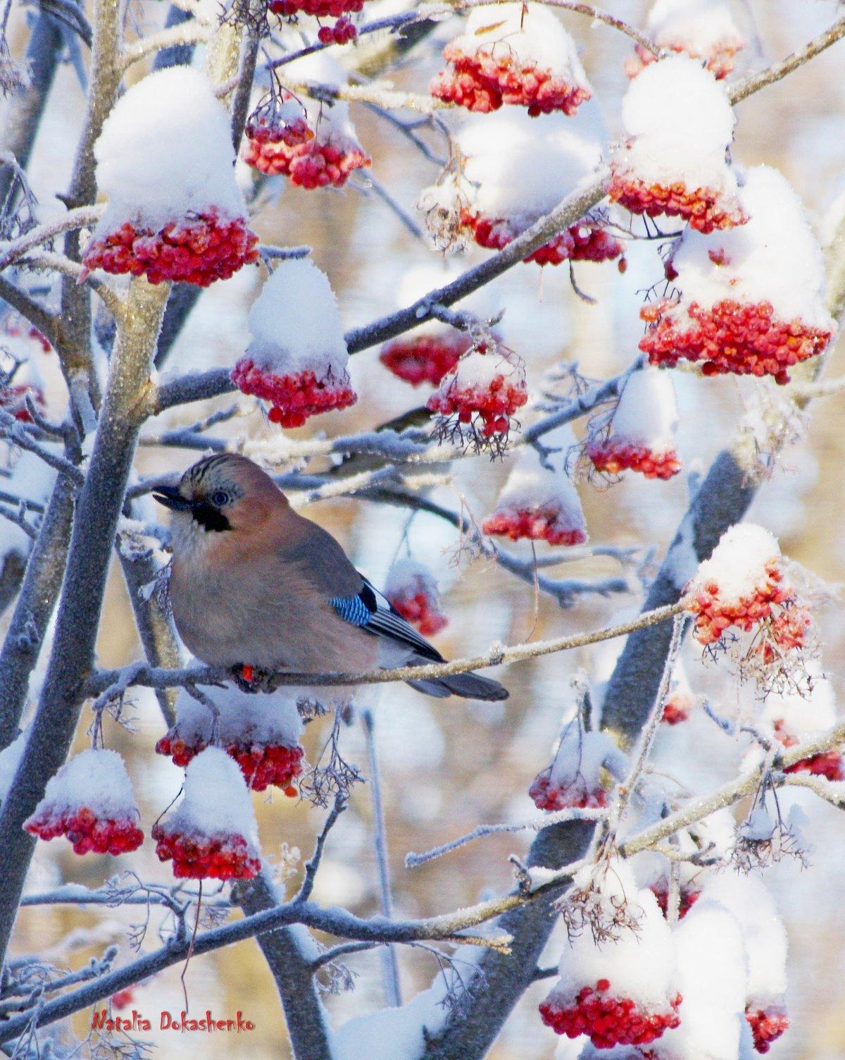 Открытка с зимой фото, люблю своих