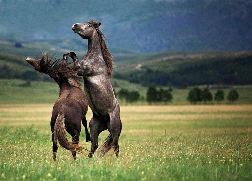 думают картинки конь танцует люблю