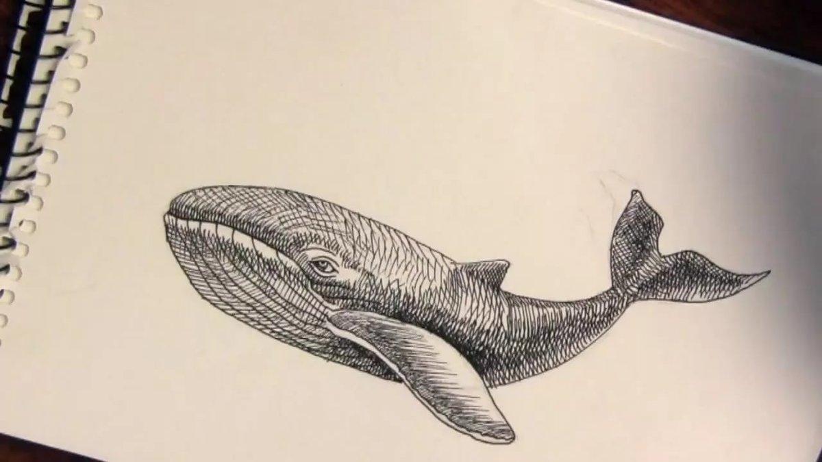 Картинки китов карандашом, стесняюсь