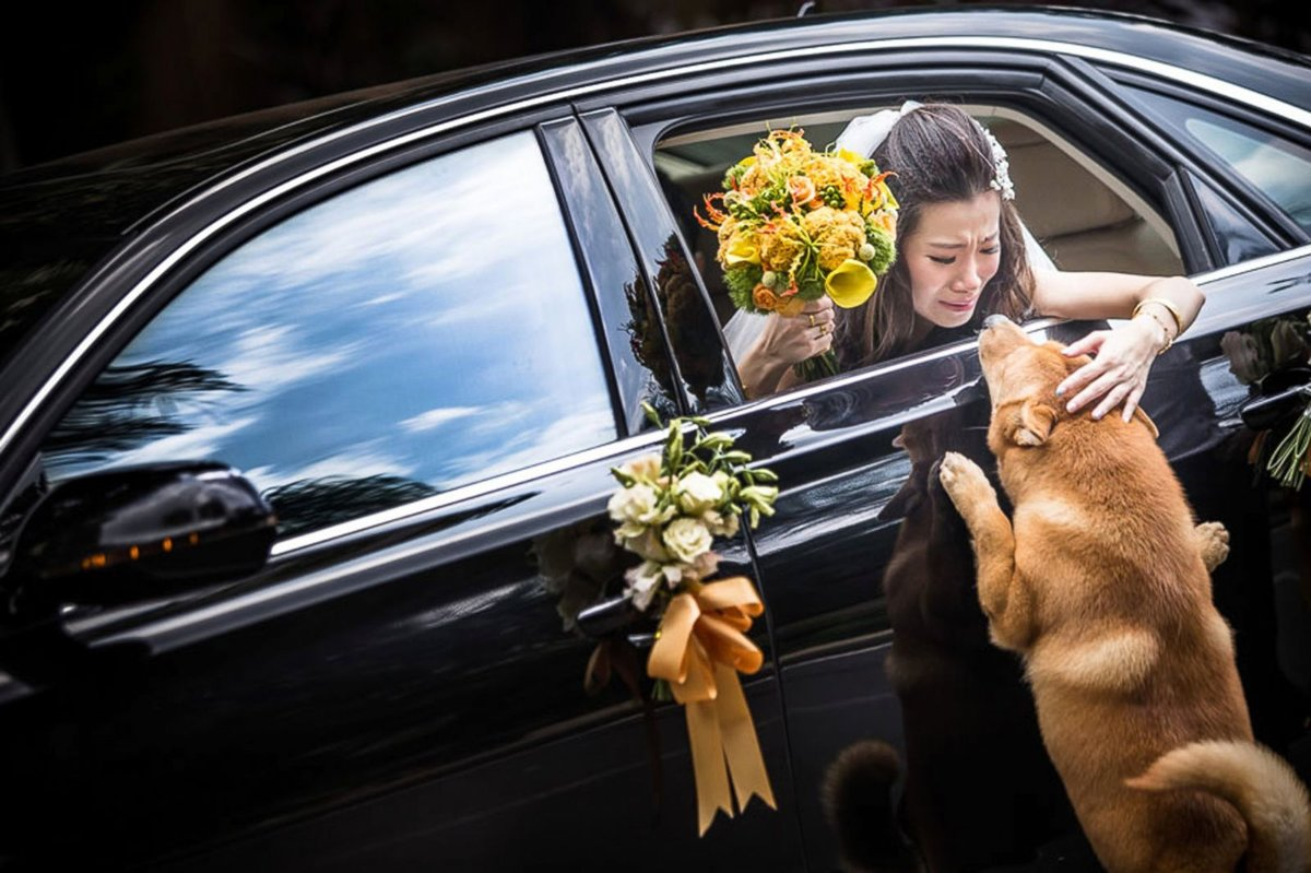 самые трогательные фото в мире описание