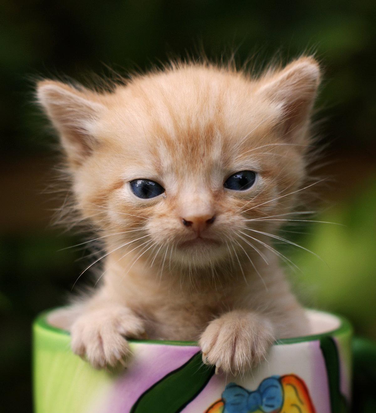 Картинки привет коты, окончание университета