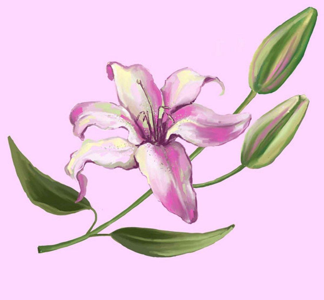 Открытки нарисованная лилиями