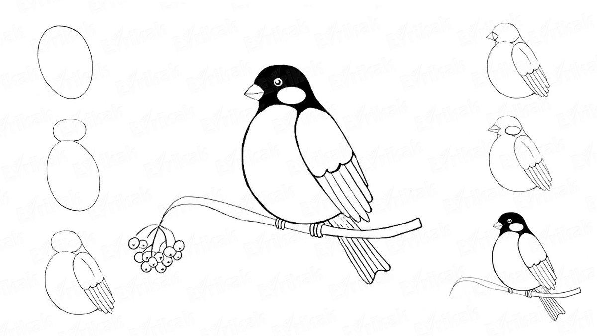 Картинки, рисунок птицы карандашом для детей