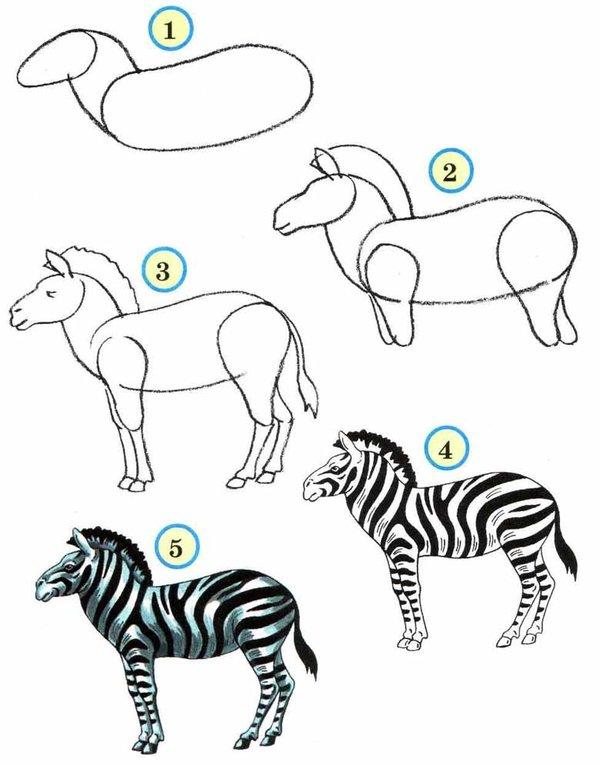 картинки про животных поэтапно