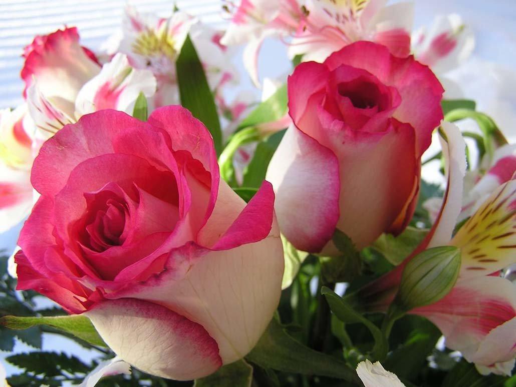 Летием свадьбы, открытка роза