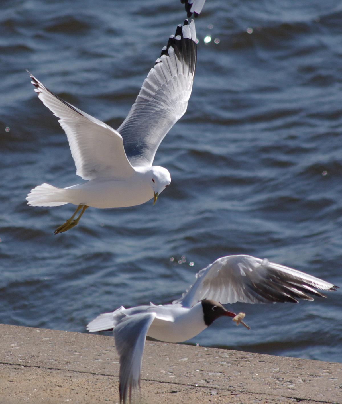 того чтобы чайка над морем фото время присяги