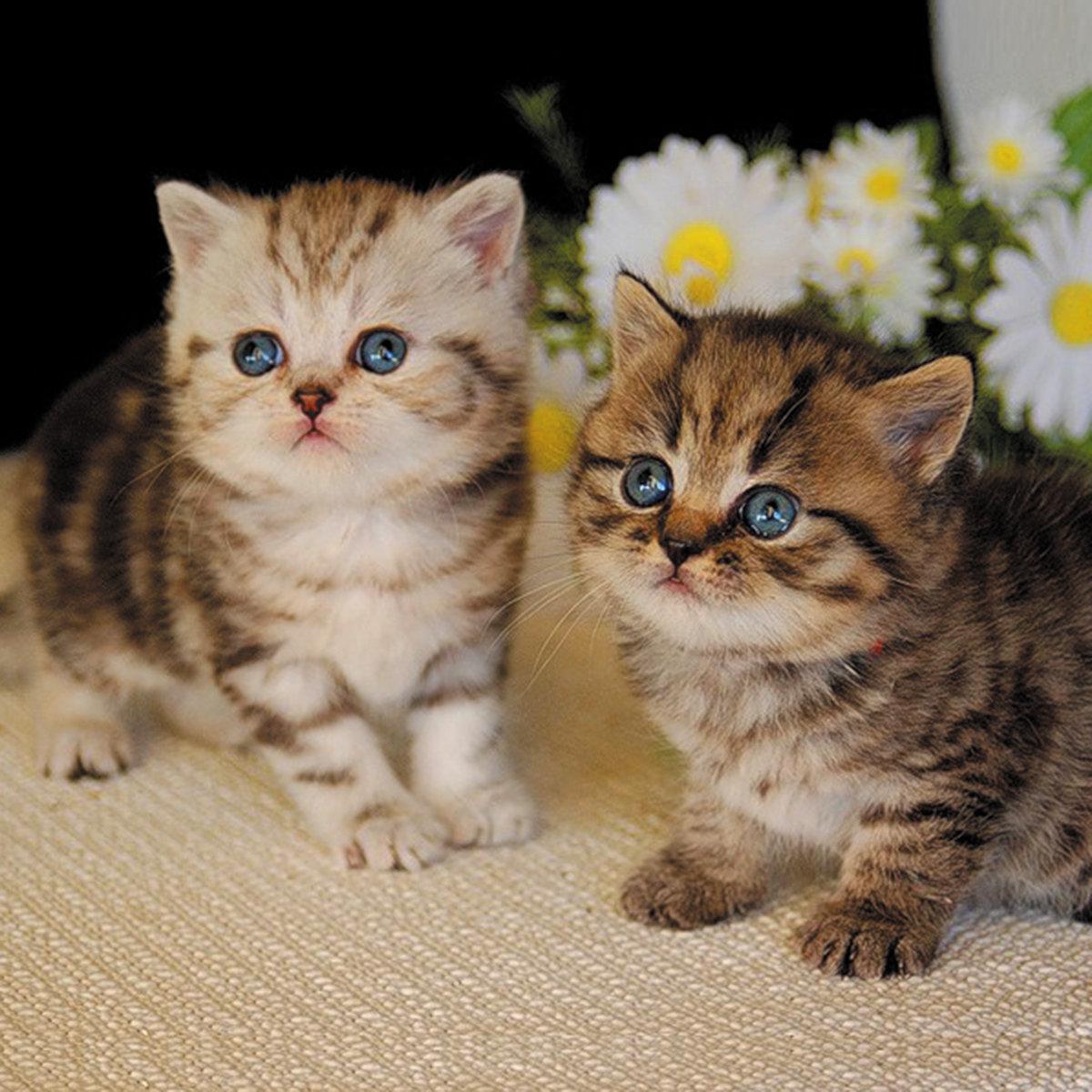 Надписью, картинки с котятами фото