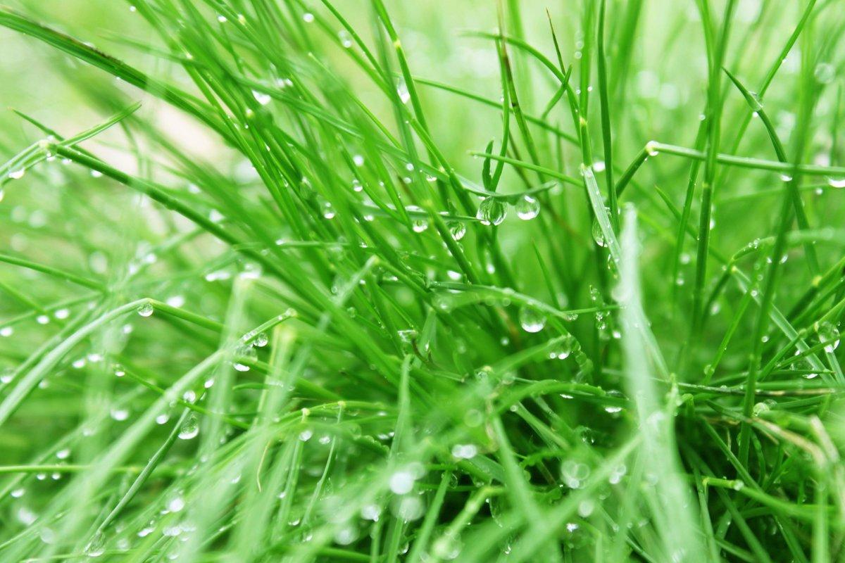картинки трава с росинкой онлайн для