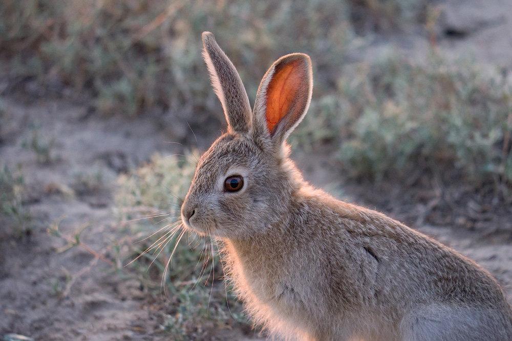 рождения дочки виды зайцев фото с названиями отличаются