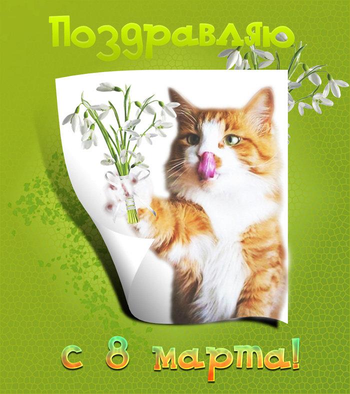 День, открытки на 8 марта с кошками