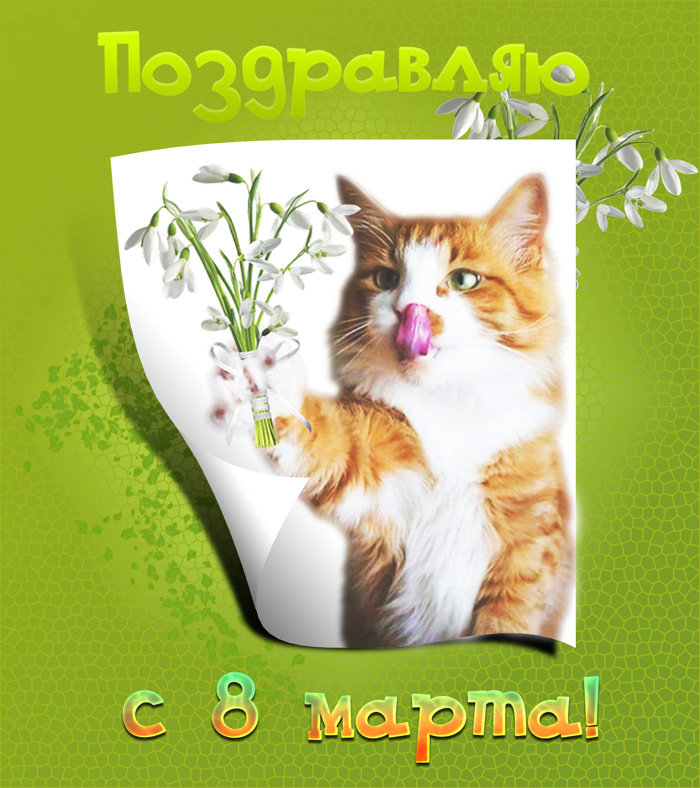 Картинки на 8 марта с котами