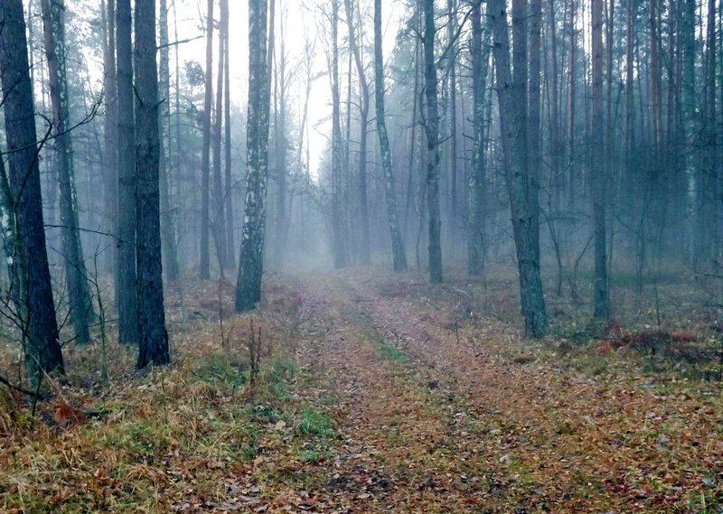 Синий туман#конкурс #лес #ниф #осень #пейзаж #природа #туман #утро