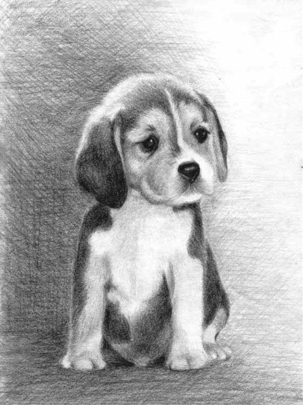 Нарисованные картинки собак карандашом