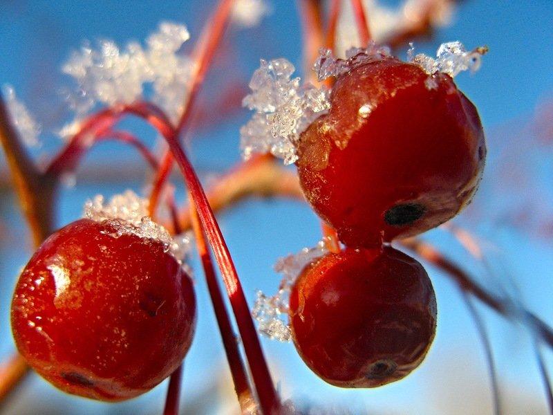 Картинки ранеток зима